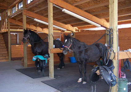 dressage facility grooming area